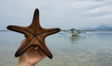 Startfish, Palawan, Philippines